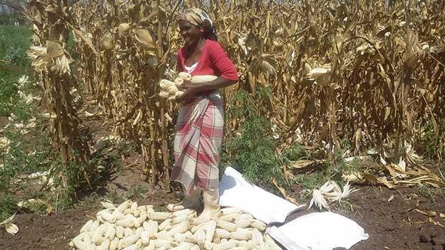 A-woman-farmer-in-Mozambique_