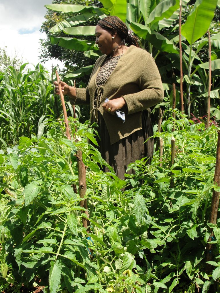 Farmers-such-as-Peris-Wanjiku-continue-to-battle-climate-related-risks-at-a-more-frequent-and-intense-rate.-Photo-Joyce-Chimbi-768x1024
