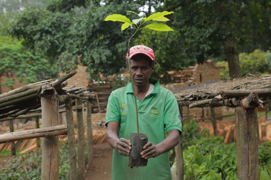 Nsabimana-who-worked-in-tree-plantation-more-than-40-years-believe-that-they-have-been-considerable-seeds-improvements-1-1024x683