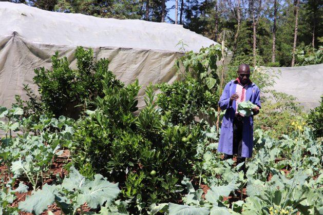 Samson-Tanui-on-his-permaculture-unit-in-Eldoret-629x419