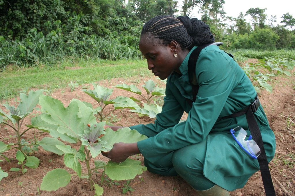 The-IITA-Young-Agriprenuer-Programme-is-promoting-youth-participation-in-agribusiness-with-hands-on-skills-in-farming-and-entreprenuership-April-2017-credit-Busani-Bafana-IPS-1-1024x683