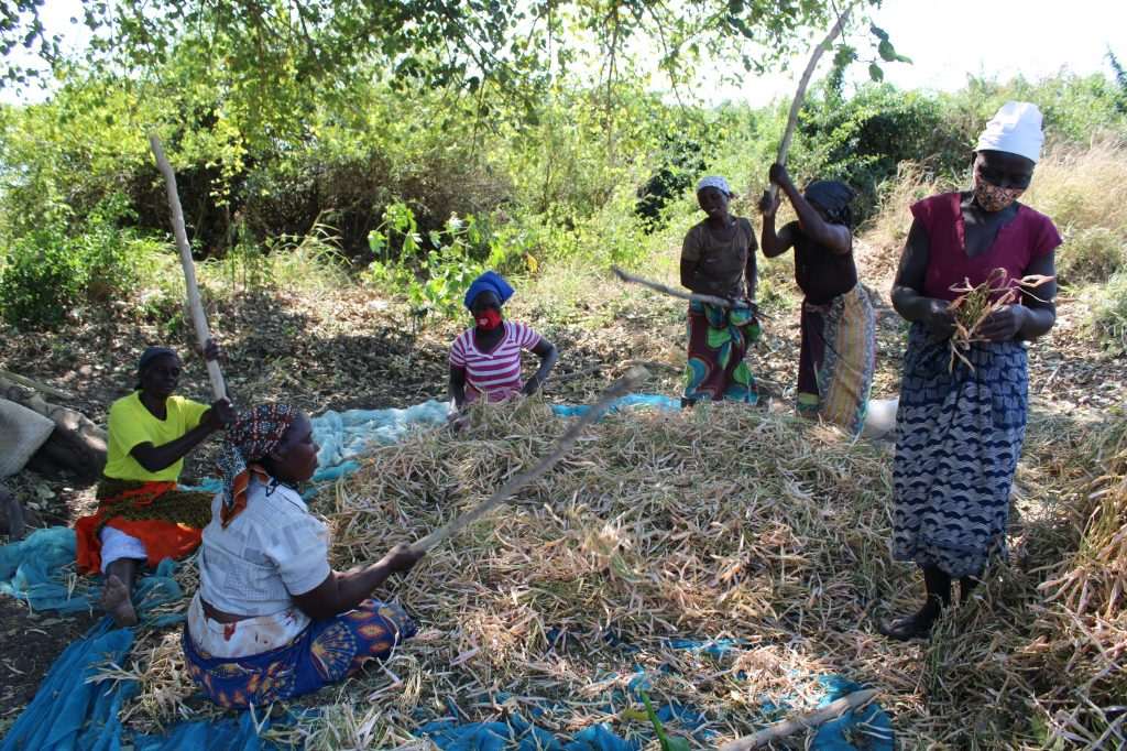 Women-produce-more-than-50-percent-of-the-food-in-the-world-but-are-disadvantaged-when-it-comes-to-access-to-resources-such-as-land-and-financial-services-credit-Busani-Bafana-IPS-1-1024x682