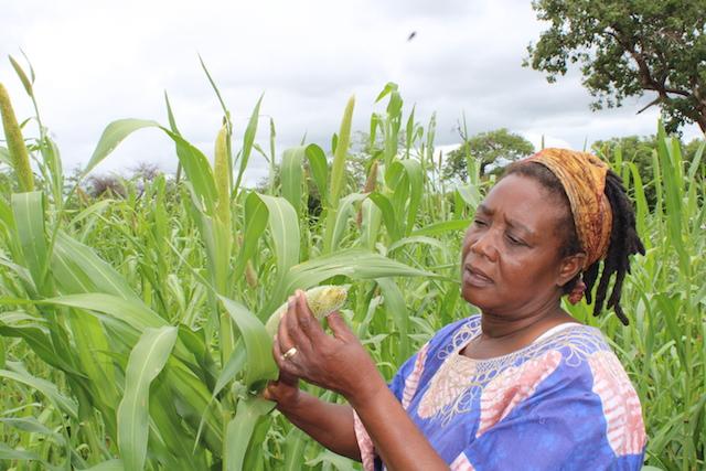 Zimbabwean-farmer-Sinikiwe-Sibanda-looking-at-her-pearl-millet-crop-at-her-farm-outside-Bulawayo-Zimbabwe-20-Jan.-2020-credit-Busani-Bafana-IPS-2
