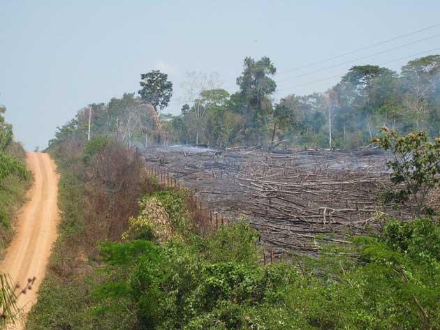 brazil-deforestation_