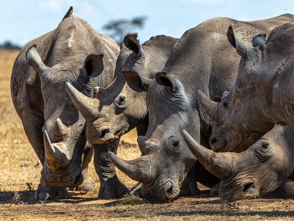 iucn-pix-1-rhino-1024x768