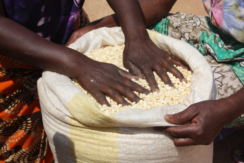 transforming-food-systems-means-putting-adequate-and-nutritious-food-in-the-hands-of-farmers-credit-Busani-Bafana-IPS-1024x683