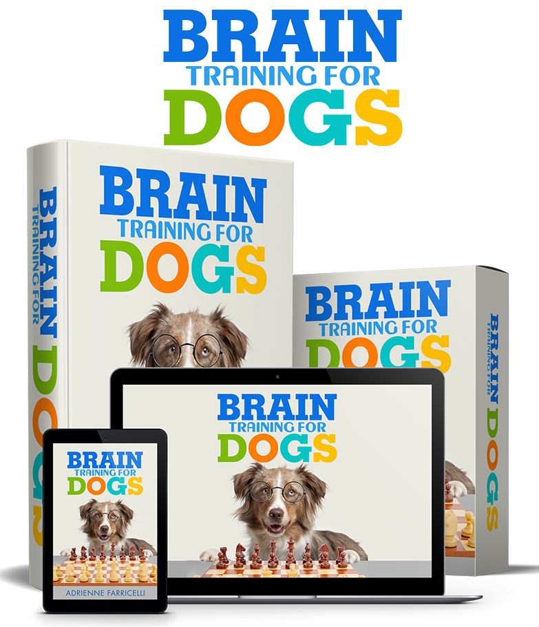Brain Traning for dogs